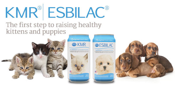 KMR | ESBILAC - The first step to raising healthy kittens and puppies.