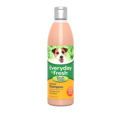 Fnc Everyday Fresh Scented 16Oz 800Px