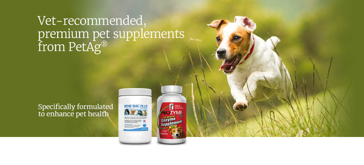 Terrier running, featured products Bene-Bac® Plus and Prozyme®