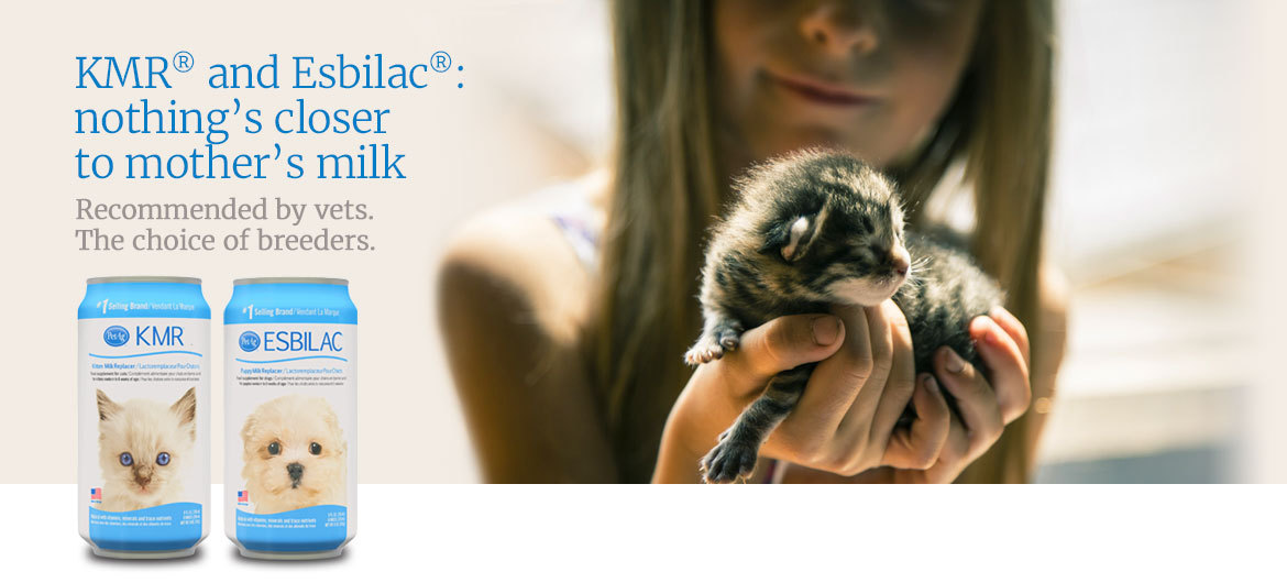 Girl holding a baby kitten, featured products KMR® and Esbilac®